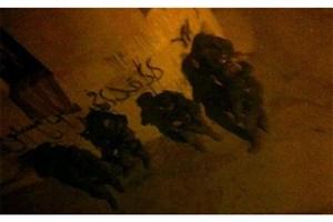 جزئیات عملیات هشت ساعته ارتش رژیم صهیونیستی در جنین