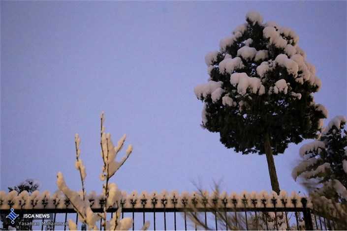 برف تهران را سپید پوش کرد