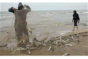 ایران برترین کشور صیدکننده آبزیان در منطقه خاورمیانه