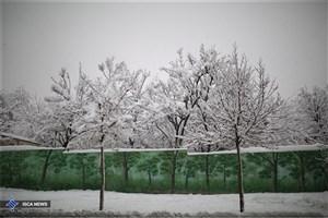 بارش برف در ارتفاعات تهران/ بارندگی ادامه دارد