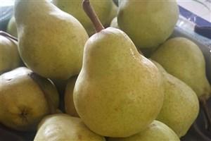 جمع آوری شبانه میوههای قاچاق  از میدان مرکزی میوه تهران + عکس