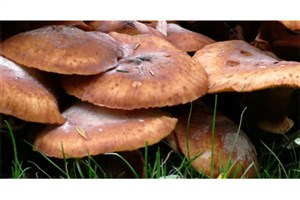 Fungal Enzymes Can Convert Wood Biomass into Valuable Chemical Commodities