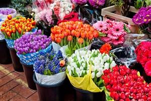 سازمان محیط زیست به تولید کنندگان  گل و گیاه نگاه ویژه ای داشته باشد