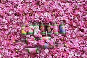 صادرات گلاب ایرانی به فرانسه و انگلیس / ارزآوری 7 میلیون دلاری گلاب گلمحمدی