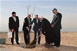 کاشت نهال به مناسبت گرامیداشت هفته منابع طبیعی و روز درختکاری با حضور رئیس جمهور