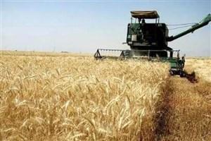 پول گندمکاران از دو روز آینده پرداخت می شود/یارانه ارز واردات برنج در گمانه زنی است