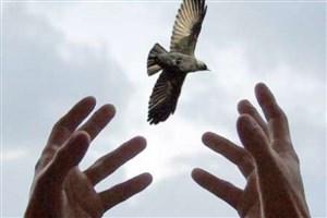 بخشش محکوم به قصاص به حرمت اربعین در گلستان