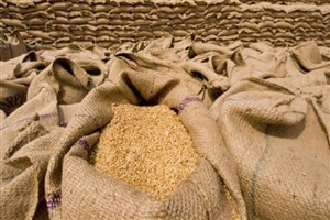 ورود سازمان بازرسی به واردات گندم/ مجوز ورود ۷۰۰ هزار تن گندم باطل شد