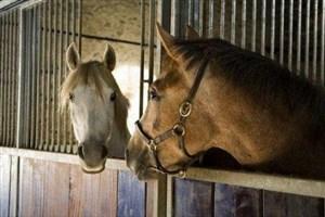 جزئیات بیشتر از تجارت اسب در ایران
