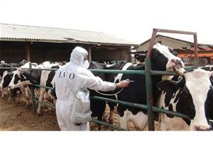 قرنطینه افراد مبتلا به تب مالت در بیمارستان لاله کذب است/هشدار نسبت به شیوع بیماری تب مالت در کشور