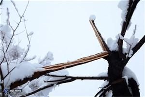 تداوم  بارش برف و باران در 11 استان/مه گرفتگی در ارتفاعات جاده ها