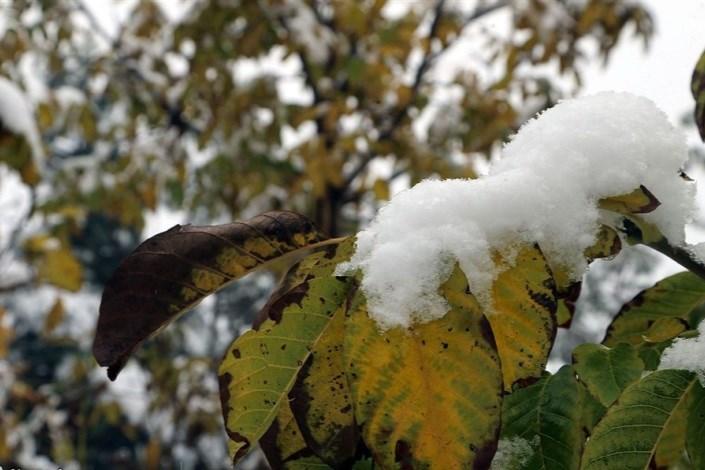 بارش برف در ارتفاعات