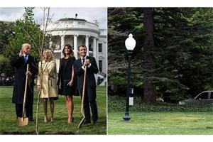 درخت هدیه مکرون به ترامپ ناپدید شد!