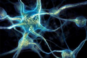 Clever People Have Bigger, Better Brain Cells