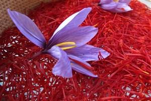 تنظیم بازار داخلی و صادراتی زعفران به کمک بورس کالا
