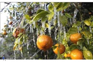 نامه باغداران به روحانی و لاریجانی/خسارت۷هزارمیلیاردی سرمای بهاره
