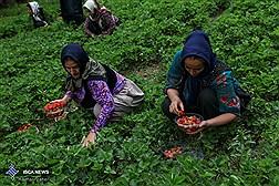27 میلیون روستایی تحت پوشش خدمات مراقبتهای بهداشتی قرار دارند