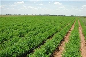 ضوابط خرید تضمینی محصولات زراعی ابلاغ شد