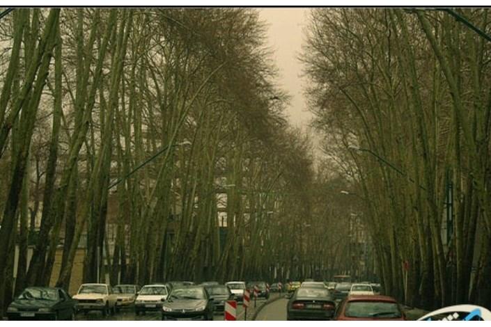 درختان خیابان ولیعصر