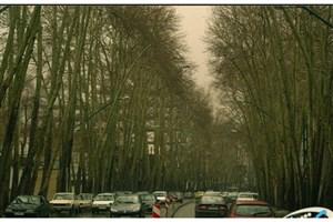 درختان خیابان ولی عصرزنده می شوند
