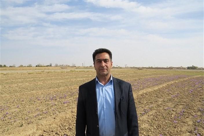 دکتر فرهاد سرداری