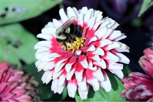 Pesticides Influence Bee Learning and Memory, Study Shows