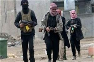هلاکت 11 داعشی در مصر