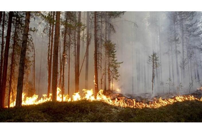 ناتوانی سوئد در کنترل آتش سوزی جنگل