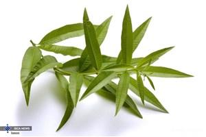 خواص گیاهان دارویی «به لیمو»