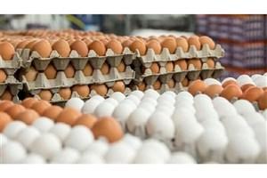 ۸ تن تخم مرغ فاسدکشف و معدوم شد