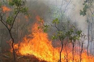 آتش به جان  مزارع کشاورزی  و باغ های  سربیشه  افتاد