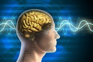 Iranian Researchers Develop Electrocorticography System to Record Brain Nerve Signals