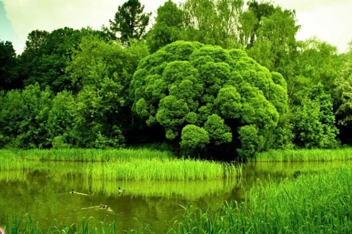 طلای سبز