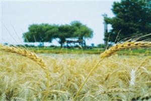 فناوریهای نو به کشاورزی ایران نفوذ میکند