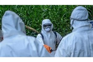 افزایش شمار قربانیان ابولا در کنگو