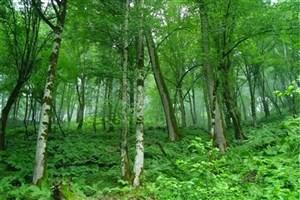 نگهبانان جنگلهای شمال ۸ ماه است که حقوق نگرفتهاند