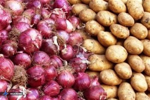 صادرات،  علت افزایش قیمت سیب زمینی در بازار داخلی