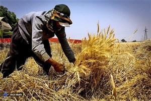 تسویه مطالبات کشاورزان تا پایان مهرماه