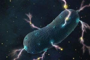 Scientists Produce Electricity from Gut Bacteria