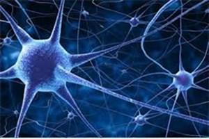 مغز و روده ارتباط مستقیم دارند