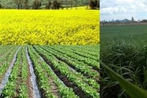 خرید تضمینی دانه های روغنی به 450 هزارتن می رسد