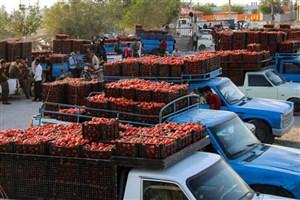 گوجه فرنگی ارزان شد/ دلار موجب کاهش قیمت سیب زمینی شد