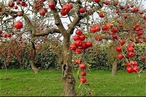 قصه  تخریب باغ سیب مهرشهر چه بود؟