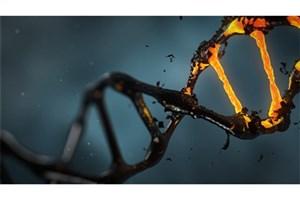 """پیشبینی قد و بیماریهای جدی با ابزار جدید """"DNA"""""""