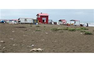 بررسی ارتباط گردشگری ساحلی، آلودگی دریا و بهداشت همگانی