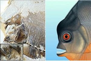 کشف فسیل 150 میلیون ساله در آلمان