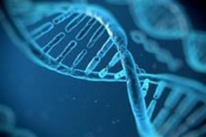 تصویربرداری از بافت بیولوژیک به روش پخش نوری ممکن شد