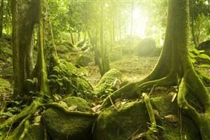 افزایش فصول مرطوب در جنگل های آمازون