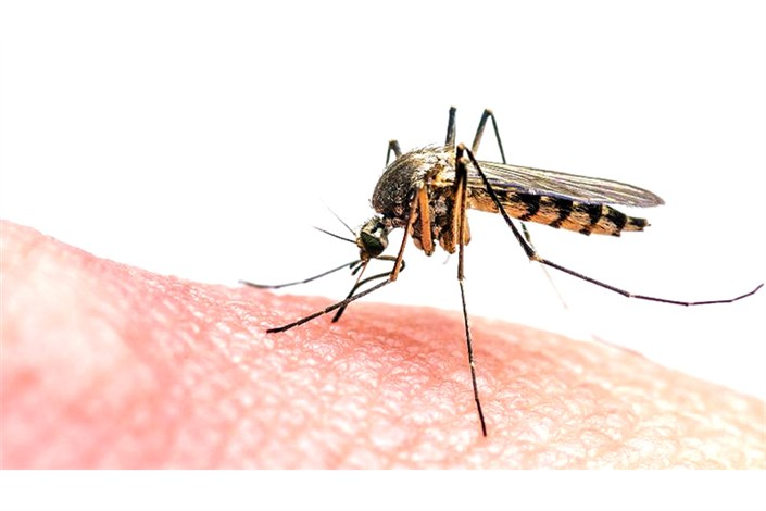 مالاریا