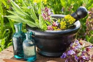 توانمندیهای داخلی به کمک توسعه گیاهان دارویی دامی میآید
